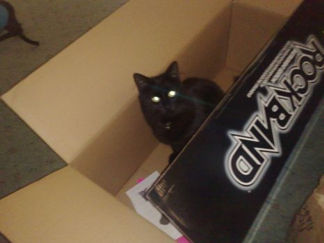 Cat In A Box by rob1610