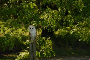 Owl by BJohnsonPhotography