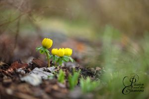 Spring is coming by PassionAndTheCamera