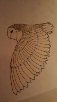 Owl drawing :) by LillyNatal