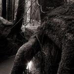 swampy forest by indojo