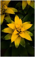 _yellow Star by un-kno-wn