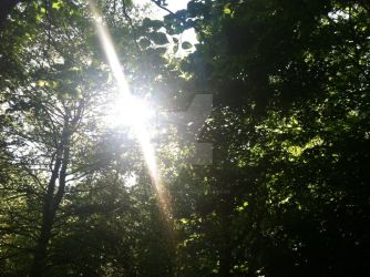 Sun in the Trees by thisweirdnerdd