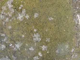 Lichen on Rock2 -Texture Stock by Somnovore