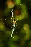 Freaky Spider by picturesarelife