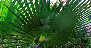 Palm Leaf by welshbeck