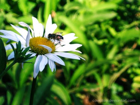 Working Bee by cowalsky