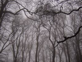 The foggy day 5 by mycophilic