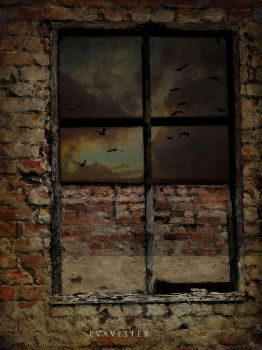 Window by EVAVESTER