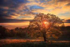 Avatar of Autumn by FlorentCourty