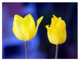 Colors of spring by Nataly1st