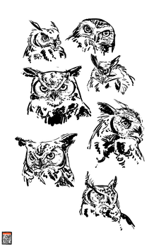 Owl Sketches by FionaCreates