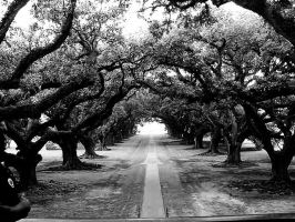 New Orleans - Oaks by Shikome