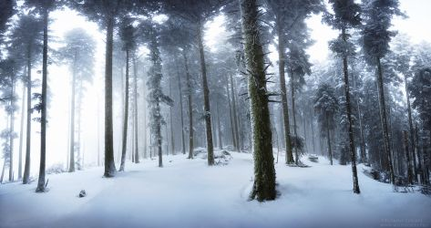 Step in Winter by FlorentCourty