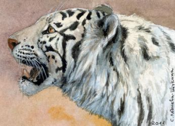 ACEO White Tigress by sschukina