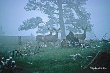 Evening Mist Mulies by mttomimages