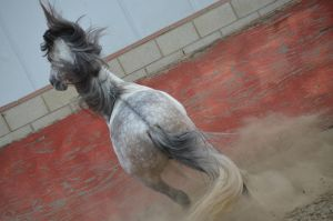DWP FREE HORSE STOCK 182 by DancesWithPonies