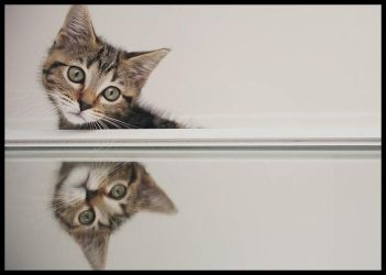 mirrored kitten by beethy