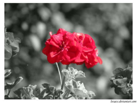 Red Flower by LS0901