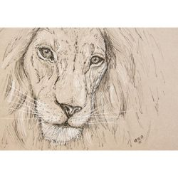 lion by n-11