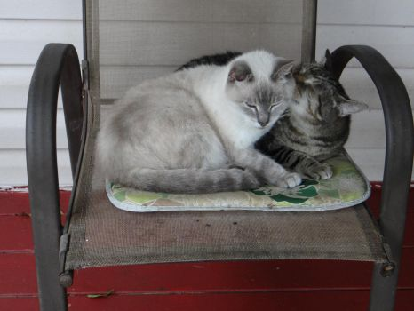 Two Old Girls, Love by henpitts