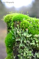 Moss and Fungi by sweir17