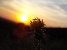 some plant in sunset by s3xyyy