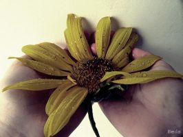 The last sunflower by beforethenight