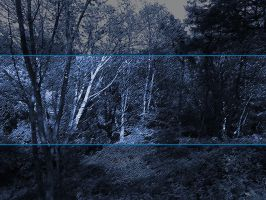 Cold Forest -Manip by furryphotos