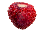 Wild Strawberry PNG by Bunny-with-Camera