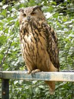 Hibou by Flore-stock