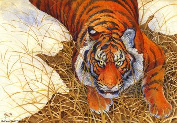 Tiger and thaw by spocha