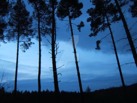 Blue sky through trees by Annelisa-Views