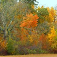 Shades of Autumn 2014.V by MadGardens