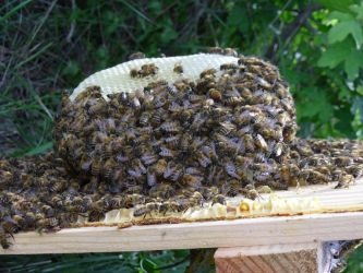 Suddenly... BEES by Odino87