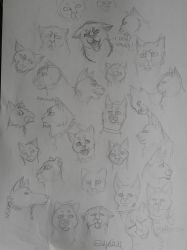 Cat faces by siljegull