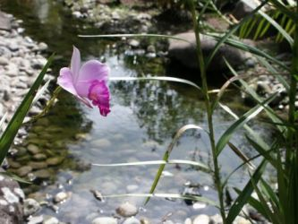 Orchid by wAkeboArdchiq920