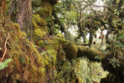 Mossy forest Stock 27 by Malleni-Stock