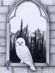 Hedwig by verreaux