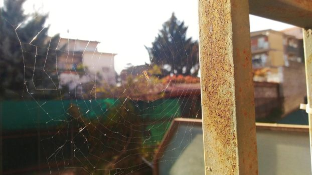 TEST - A simple spiderweb (uploaded by PC) by ScemEnzo