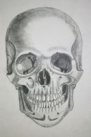 Human Skull by PatriciaLois