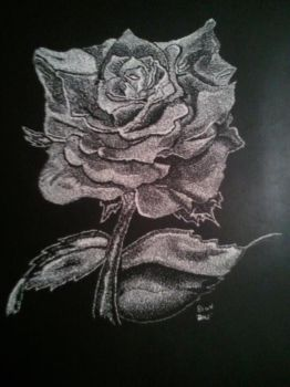Black Rose by pyrate19