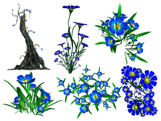 Forget Me Not PNG Stock by Roy3D