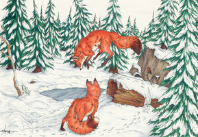 The two foxes by Kiulani