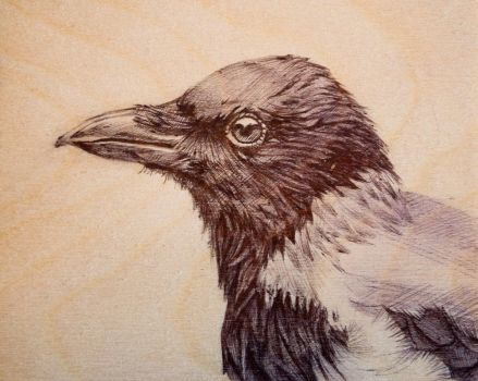 Hooded Crow by Impure-Soul-2