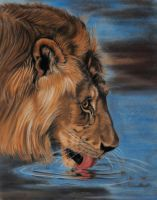Thirsty lion, pastels by Sarahharas07