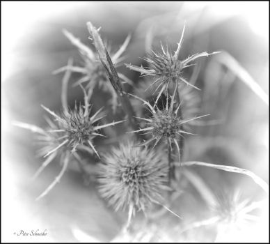 August details (VI). by Phototubby