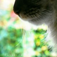 Bokeh in the Air by kuhrissa