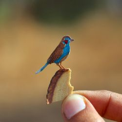 Red-cheeked Cordon-bleu - Paper cut birds by NVillustration