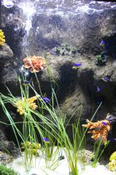 Fish in tank by ditney